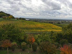 View of the vineyards at Chateau de la Riviere Estate and Winery one of the shores excursions on a Bordeuax cruise