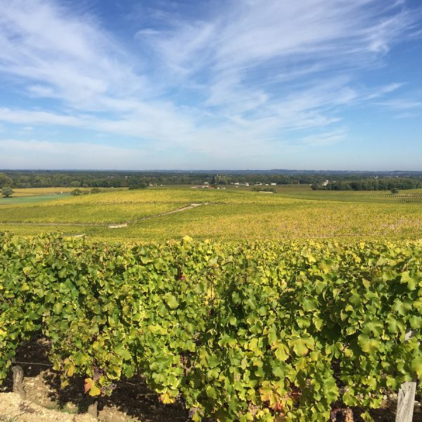 A view of a vineyard in Sauternes