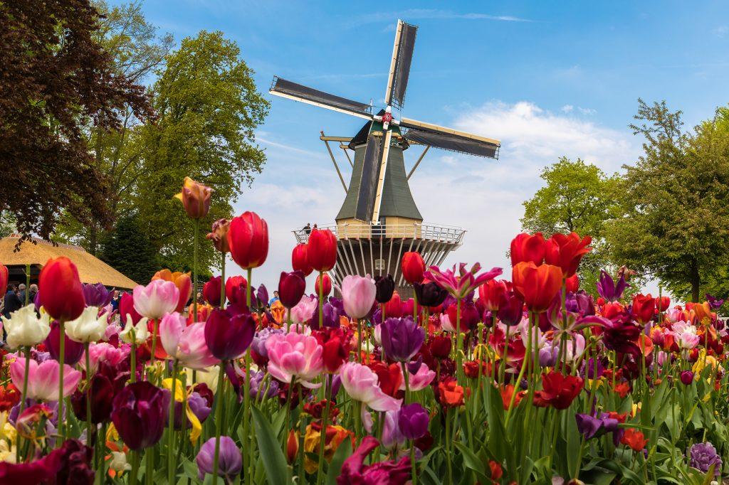 Famous Keukenhoff Gardens