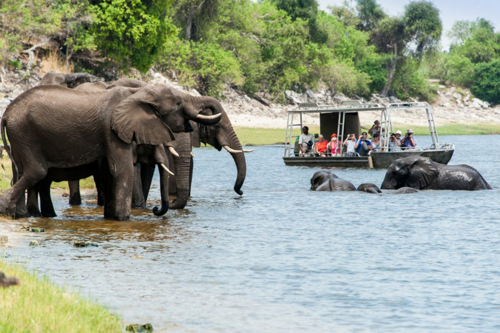 Wildlife on the Chobe